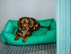 Груминг собак