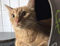 Груминг котов